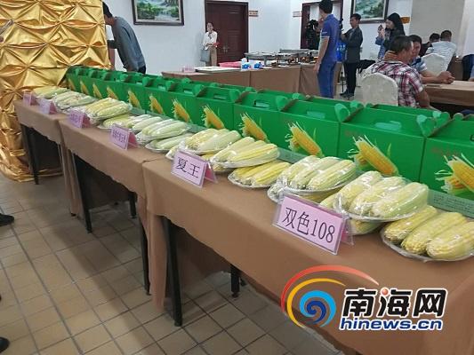 海南举办东方甜玉米产销对接洽谈会 现场签约3万吨