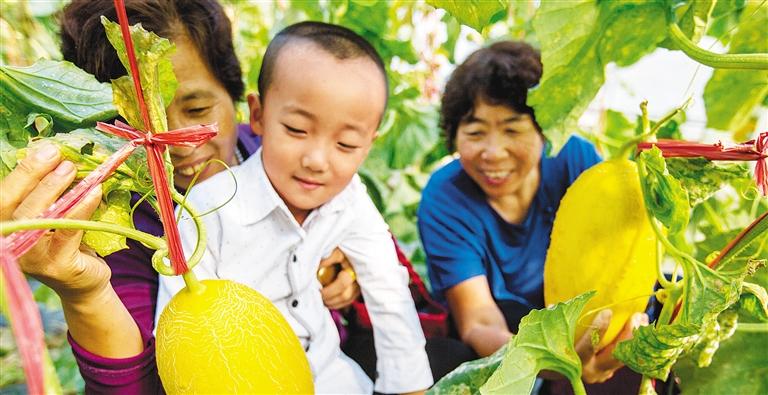 瓜果菜新品种展示会在免费申请彩金举行 173种西瓜甜瓜新品种亮相