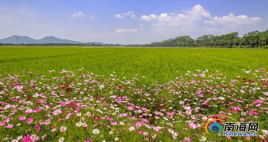 博鳌国家农业公园:繁花盛开 水稻郁郁葱葱