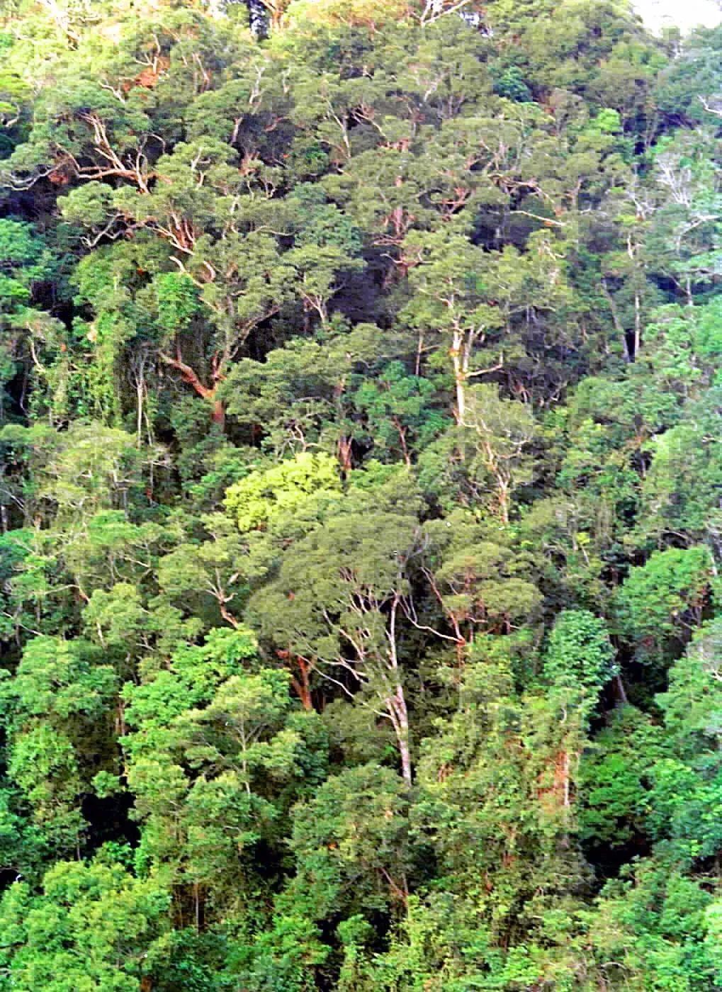 海南岛热带雨林_这就是海南!_新闻_南海网