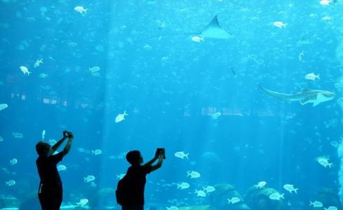 三亚・亚特兰蒂斯酒店将试营业 海洋生物引客驻足