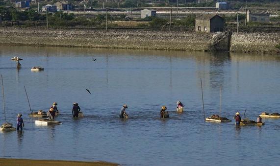 赶海挖海螺的身影构成儋州湾一道美丽风景