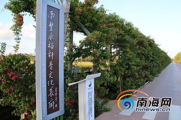 <b>三亚:南繁水稻科普文化长廊正式开展</b>