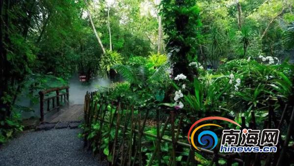 5.19中国旅游日:海南居民免门票游呀诺达雨林
