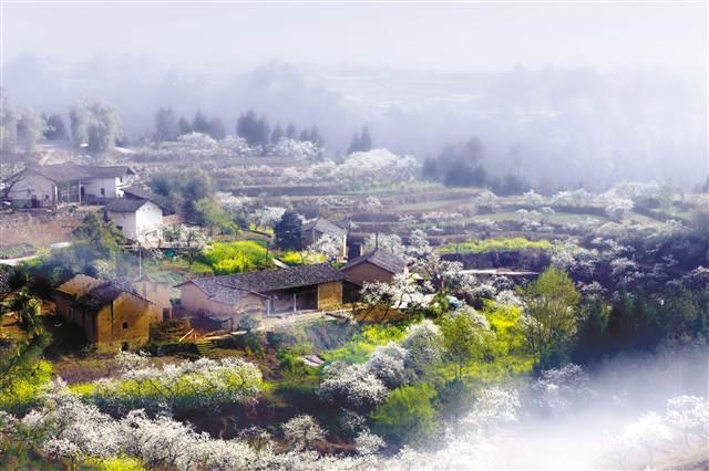 壁纸 成片种植 风景 植物 种植基地 桌面 640_426