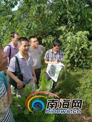 屯昌:建立数据库管理已确权土地未确权土地沟通解决