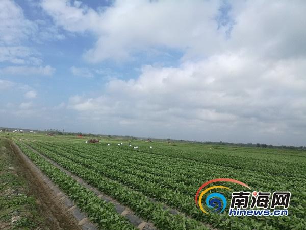 海南6年实施土地整治项目216个新增耕地4.7万亩