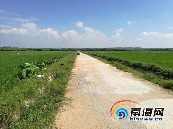 临高:土地整治让零散土地连成片促进增产增收