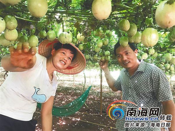 """临高多文镇凤雅村打造""""一村一品""""特色扶贫产业"""