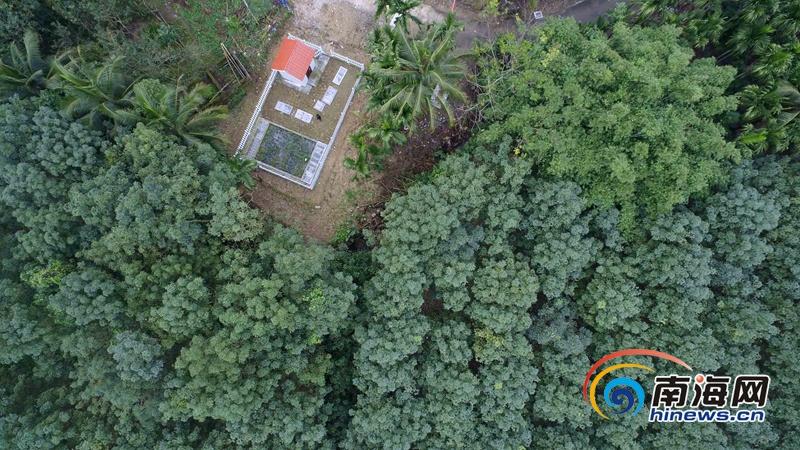 围观!琼中人工湿地污水处理系统既独特又美观