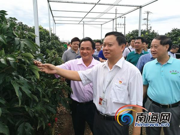 海南农垦召开农业物联网会议强调以物联网提升农业生产水平