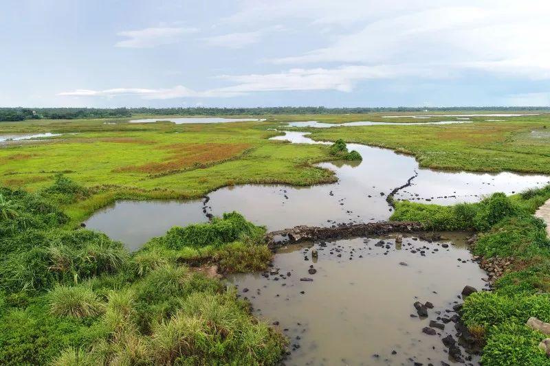 海南公布第一批省级重要湿地名录海口这3处湿地上榜啦!