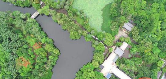 万宁网媒行| 兴隆热带花园:雨林深呼吸,唯此以温柔相待