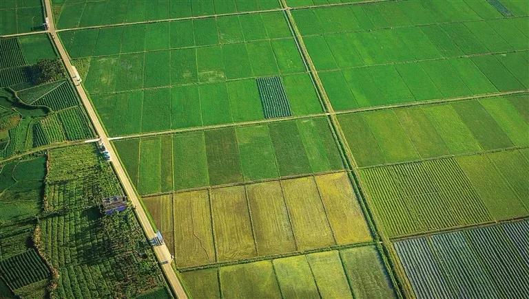 三亚:2020年每个区将至少建成1个常年蔬菜应急保障基地