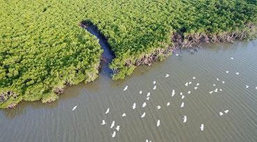航拍海南东寨港红树林保护区