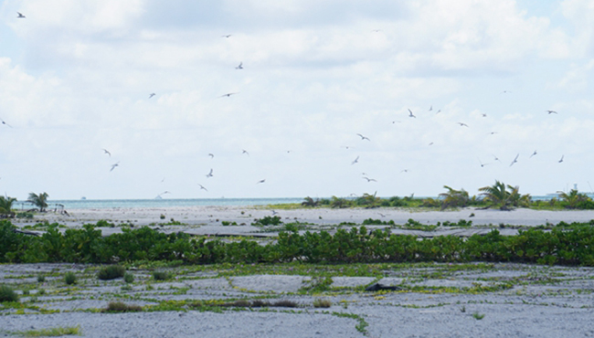 成群海鸟在西沙洲繁衍生息