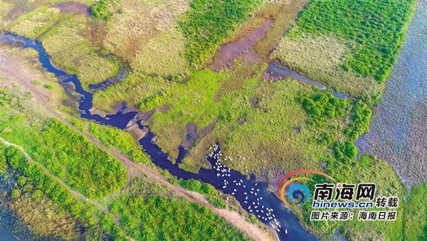 海南周刊|海南城市公园:让都市生活更自然