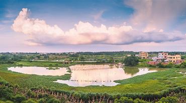 海口江东新区陶地村湿地水草茂盛 生态良好令人陶醉