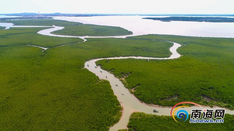 <b>海口江东新区东寨港红树林自然保护区美如画卷</b>