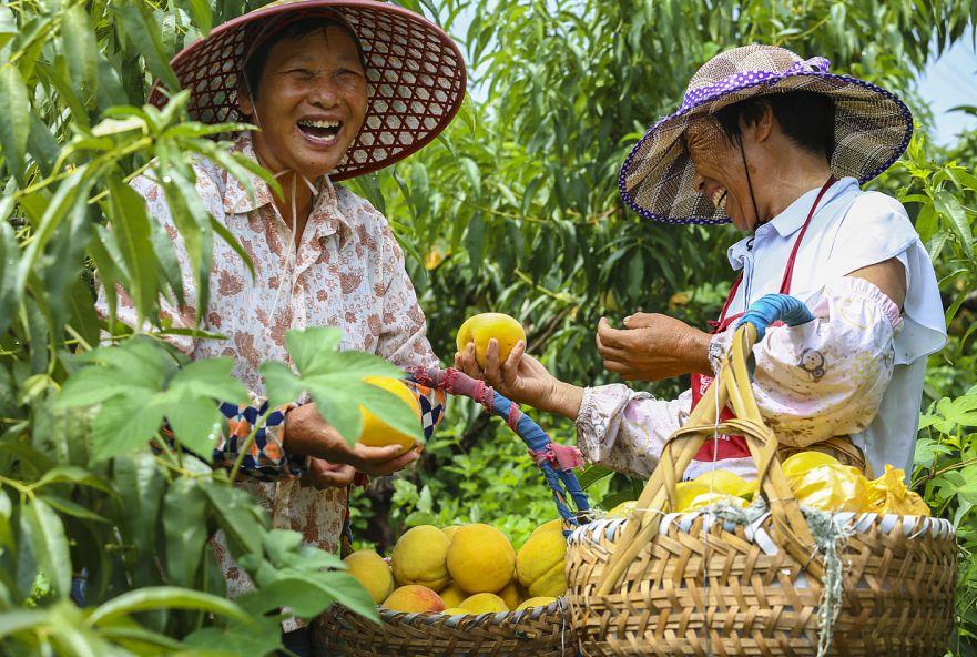 所有人,中国农民丰收节来了!