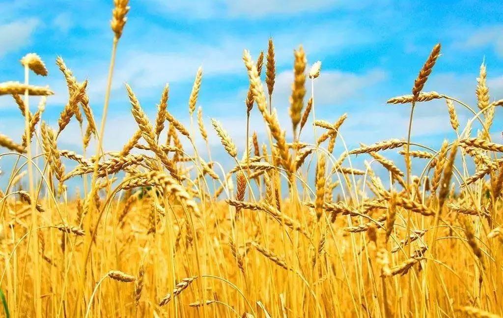 从不断优化农业种植结构,探索规模化农业发展模式,到鼓励新型农业主体