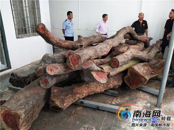 海口人民公园两株花梨木拍卖 网上515.2万元起拍