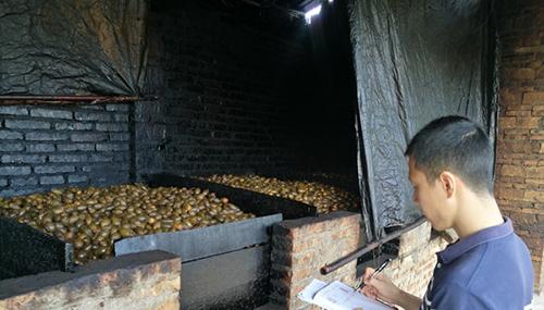 定安岭口镇一村子有13个土炉进行烟熏槟榔