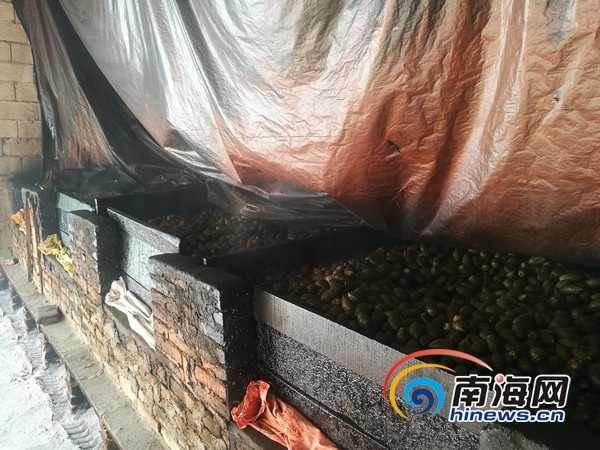 联合执法组在定安岭口镇发现313个土炉其中10个正熏烤槟榔