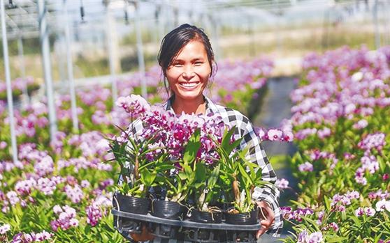 东方市成立兰花种植合作社 让贫困户升级为技术农民